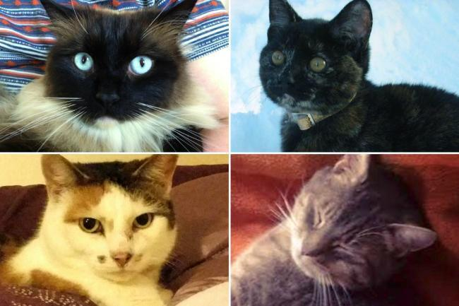 The deaths of these four cats, pictured, (none of which are the cats in this article) have been linked to the animal killer investigation