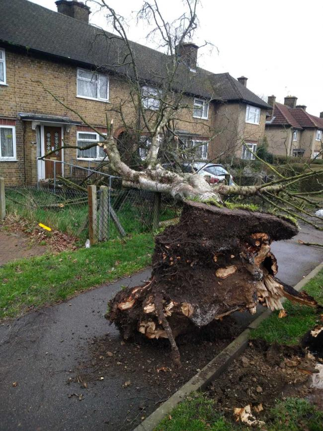 A tree that fell in Long Springs (Photo: Ringway)