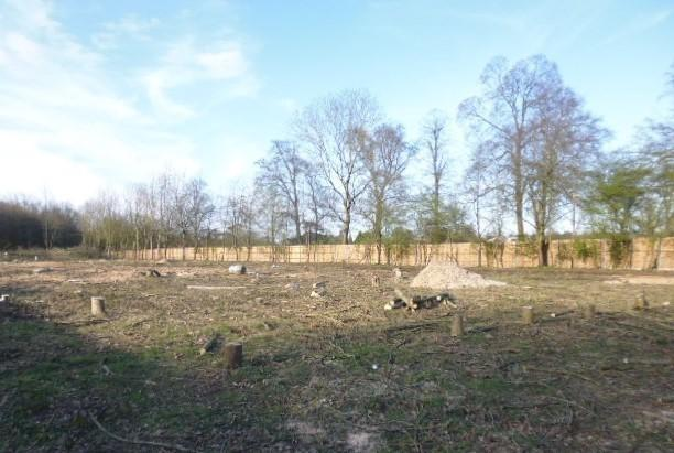 The woodland in Langleybury has been 'ruined' (photo Three Rivers District Council)