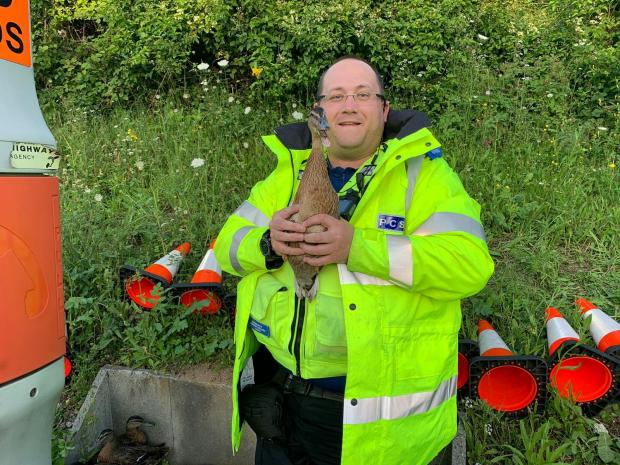 Watford Observer: PCSO Steve Jacob with one of the ducks