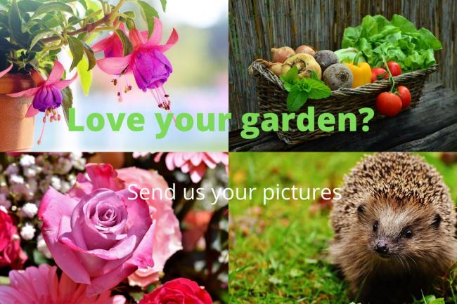 Send us your garden pictures