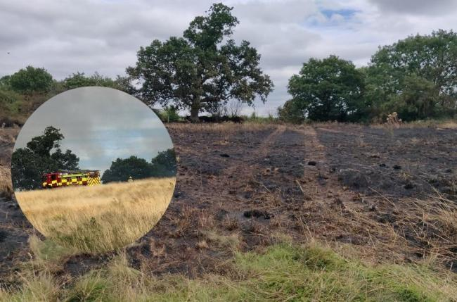 Some grassland affected by the fire. Credit: Brian Scott