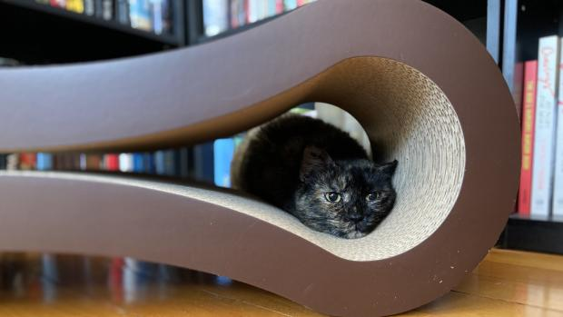 Watford Observer: Shadow loves every part of the PetFusion lounger. Credit: Reviewed / Kate Tully Ellsworth
