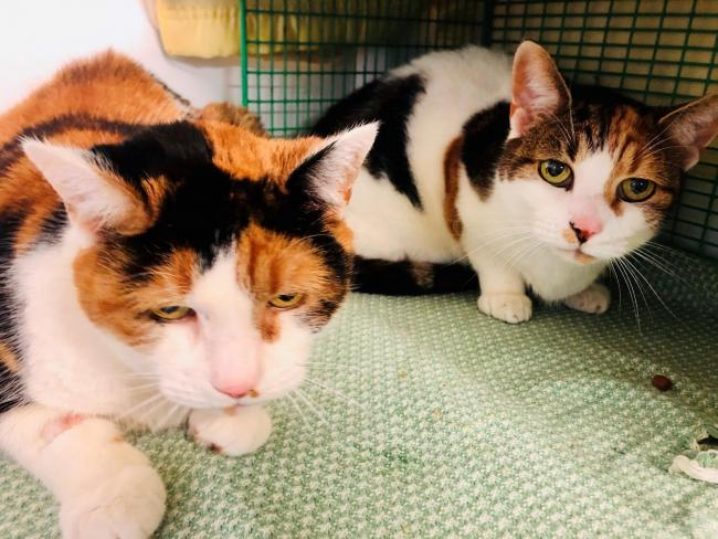 Smudge and Mitzi are 11-year-old sisters