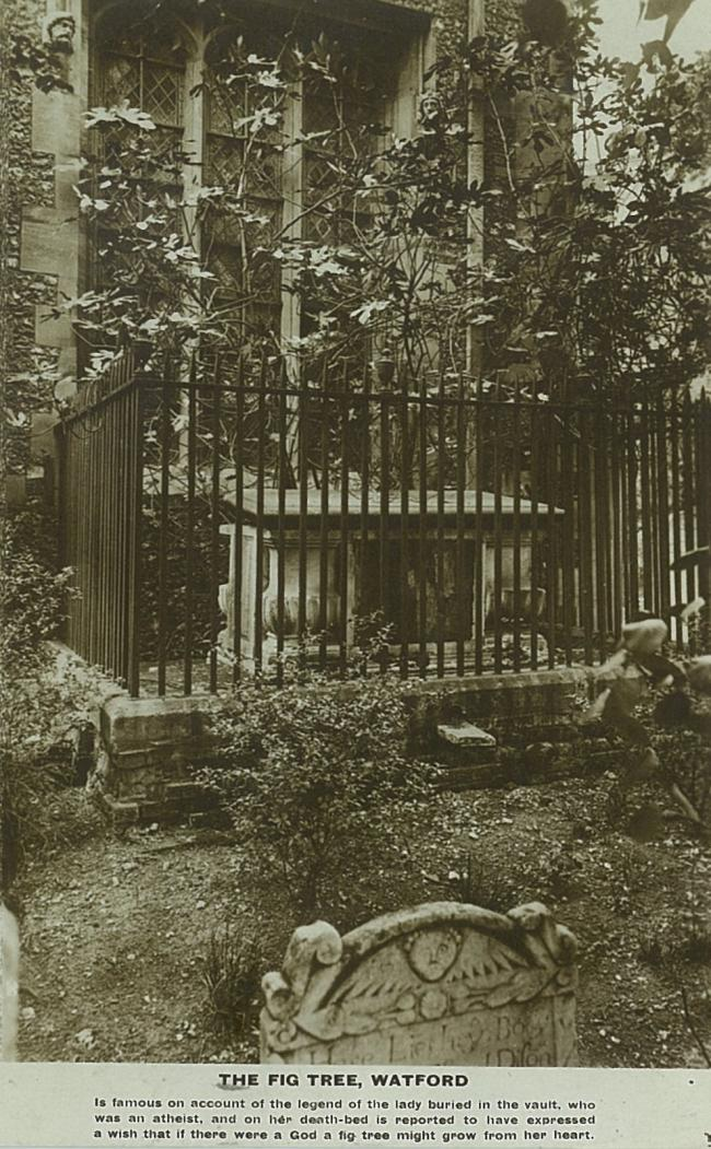 The 'fig tree tomb' in St Mary's Churchyard. Photo: Watford Museum