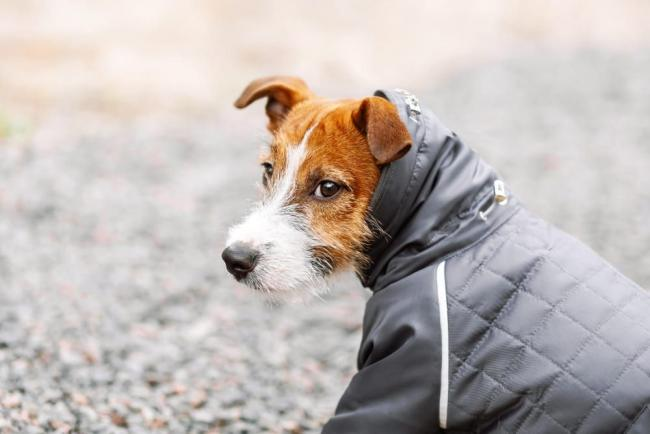 How to keep your pet safe as experts warn cold weather poses a 'serious threat' (JPI Media)