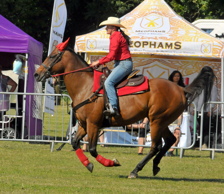 The Bucks Town and Country Show