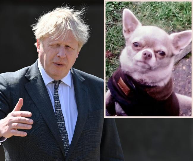 Boris Johnson has backed calls to crack down on dog thefts - Molly the dog was recently stolen in Croxley