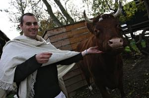 Production of UK's Most Expensive Milk, At Bhaktivedanta Manor To Be Expanded thumbnail
