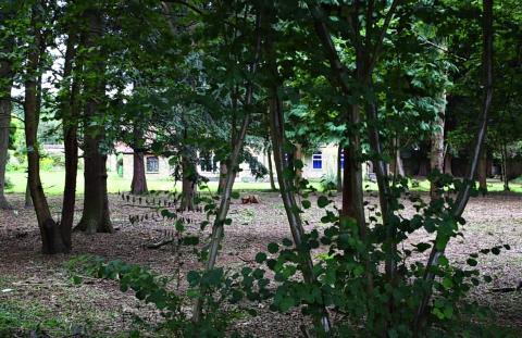 Ancient woodland or the future site of 45 new homes?