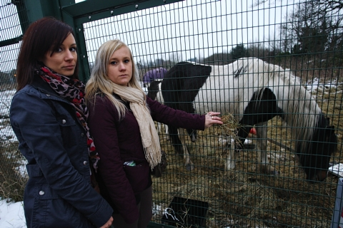 Abandoned horses could be 'destroyed'