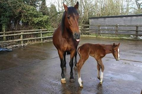 Fennel the horse gives birth to son