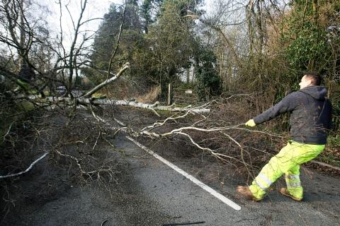 Road blocked after tree fall