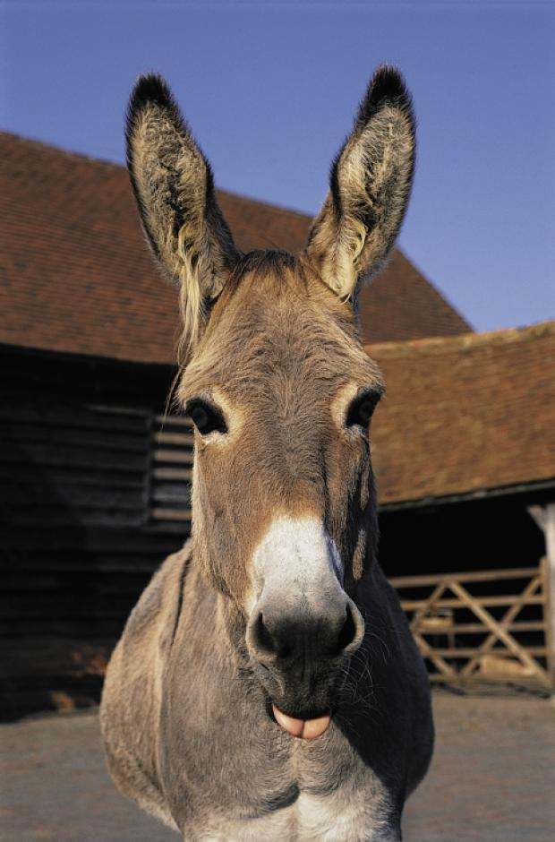 Vicar launches online appeal for donkey