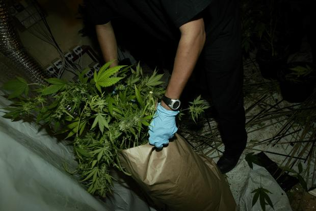 Stock picture: Cannabis factory found in north Watford