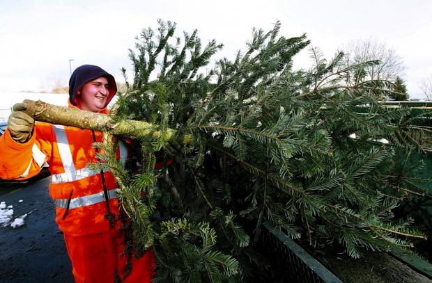 Record number of Christmas trees recycled