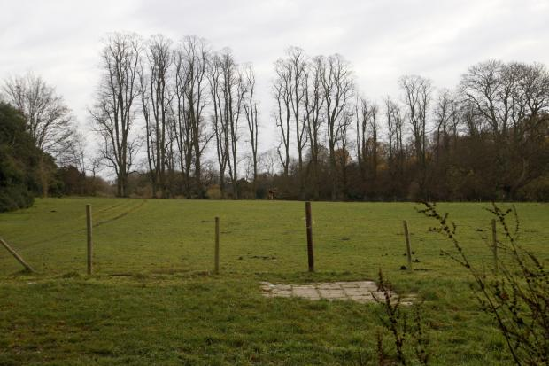 The horse field in Baldwins Lane, Croxley Green.