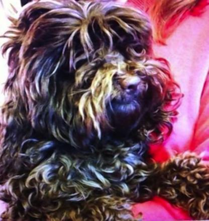 Dog owner appeals for help to find missing Maisy