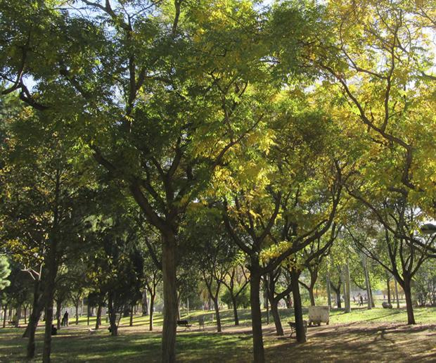 Council funds trees to make roads greener