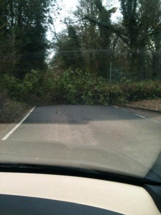 A fallen tree blocks Grove Mill Lane in Watford. Picture by @RickyTrafford