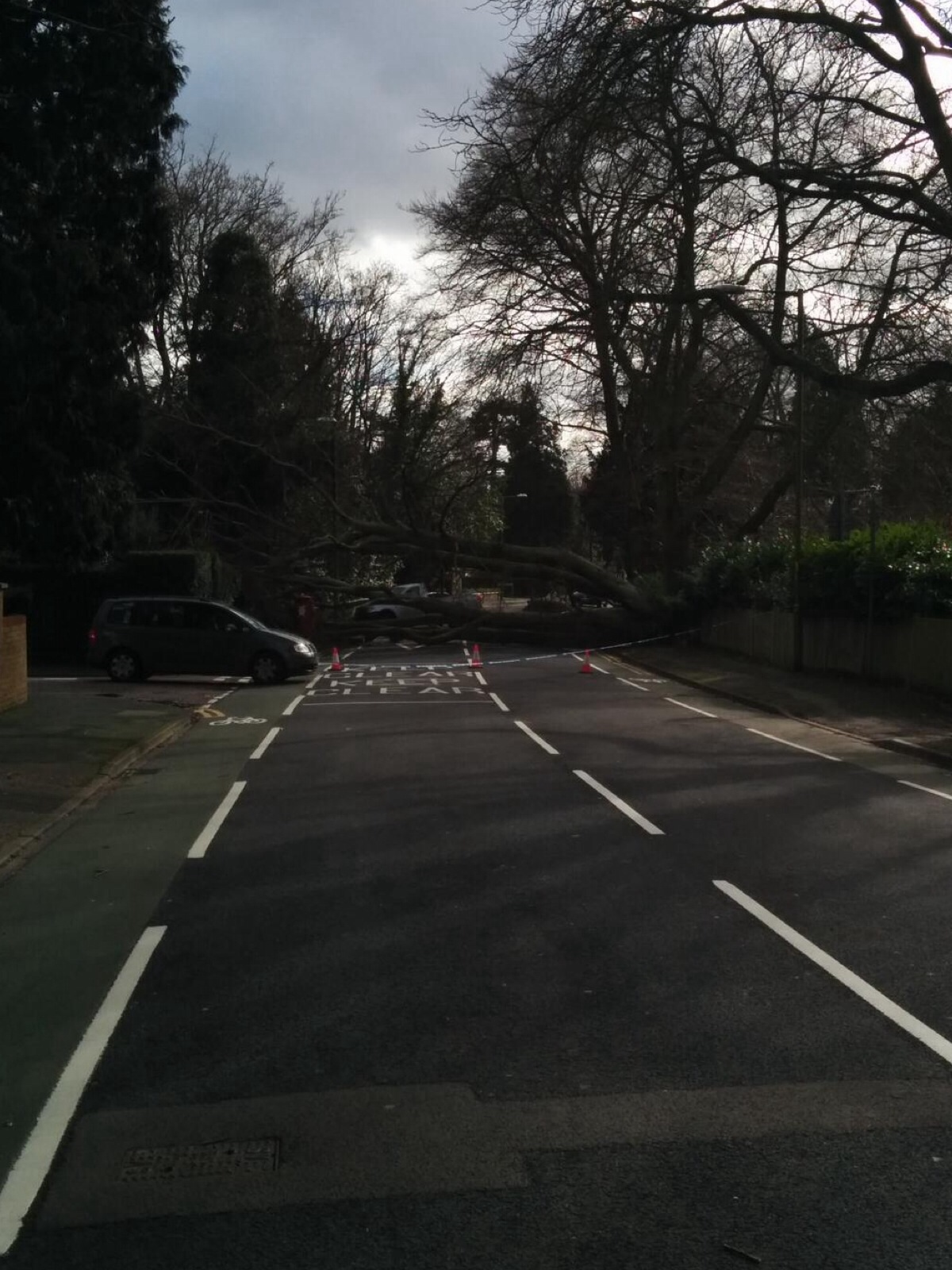 Tree down in Nascot Wood Road