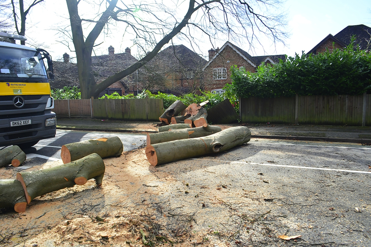 Large tree toppled by high winds in Watford removed
