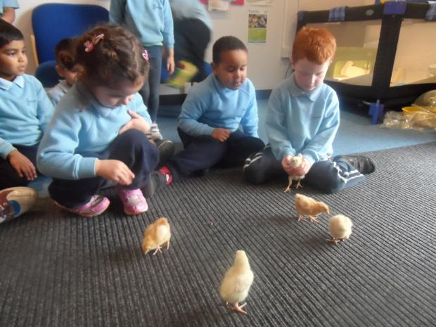 Eggcellent life lesson for Bushey students