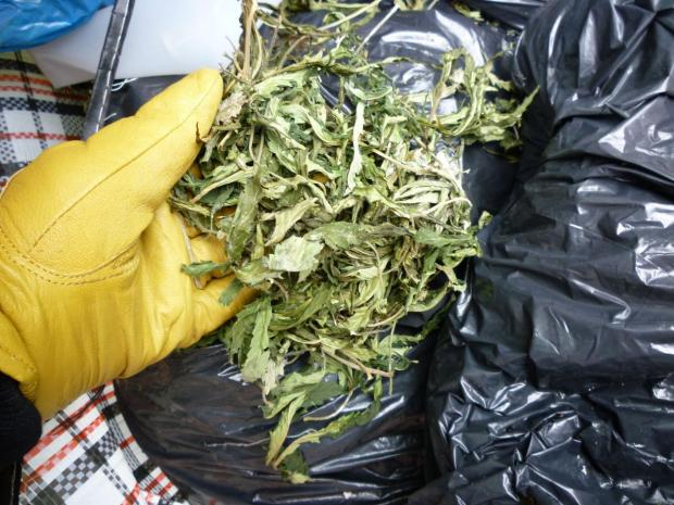 Laundry bags full of cannabis found by council workers at fly-tipping hotspot