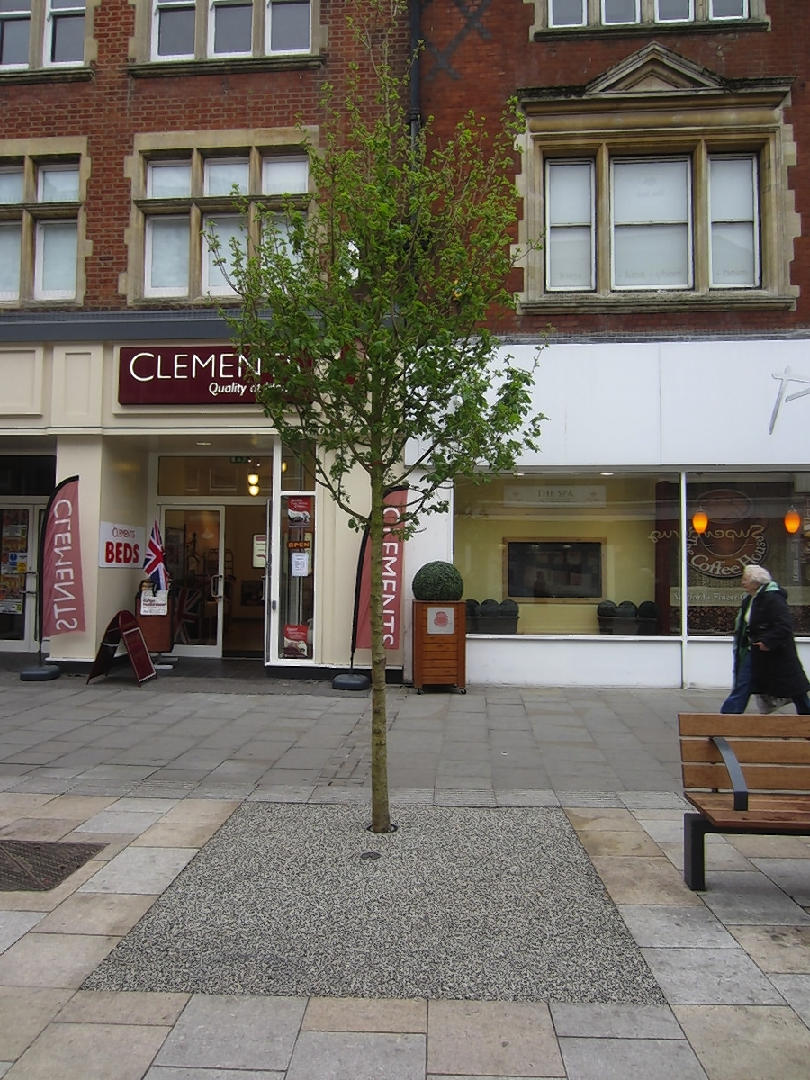 Watford Parade revamp: 50 new trees to be planed in town centre