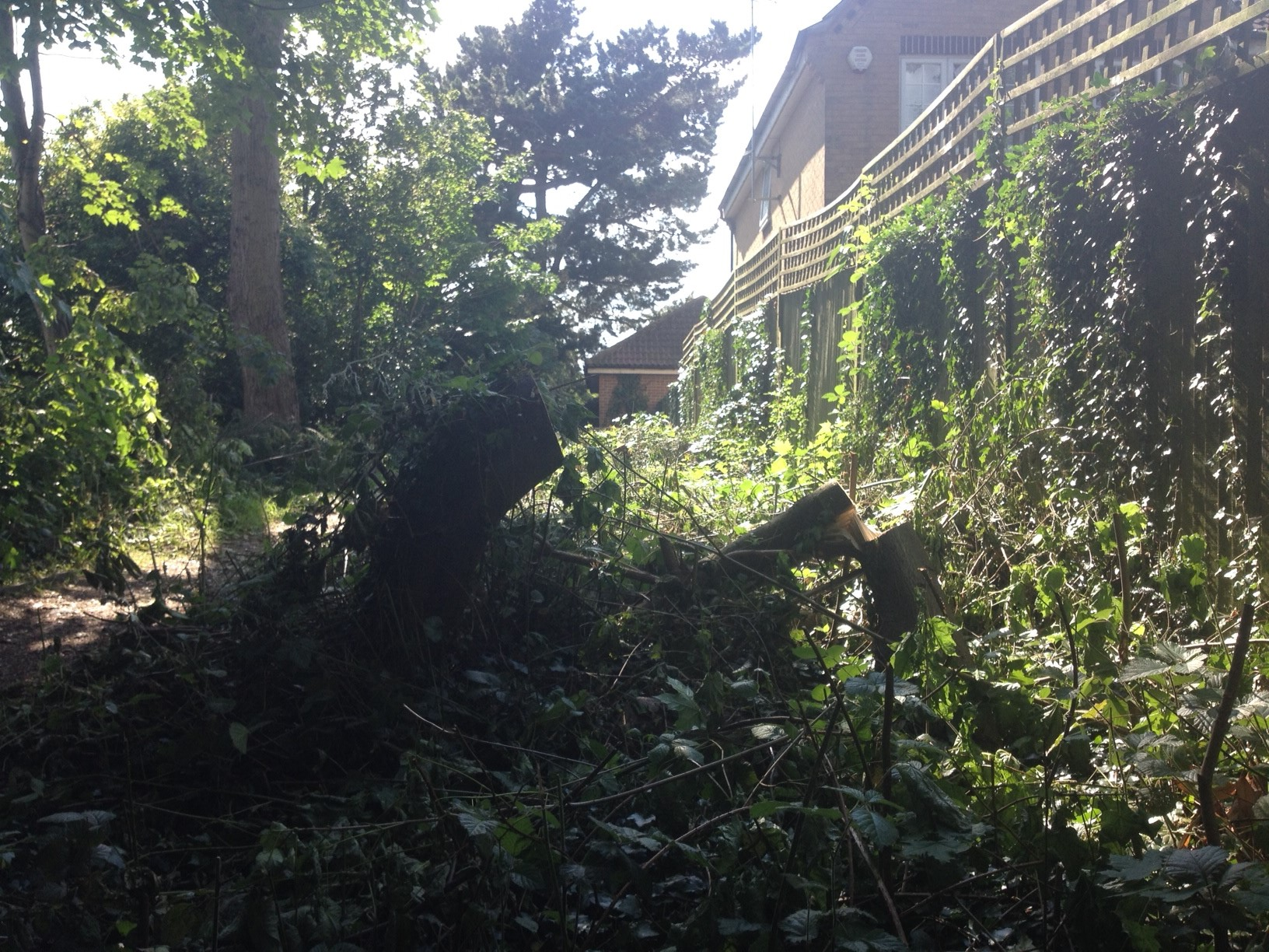 Police hunting three men after trees cut down in act of 'wanton vandalism'