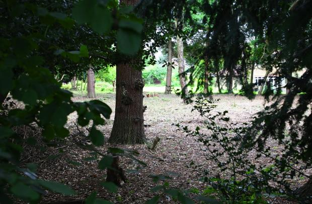 Plans to build 20 homes on ancient woodland in Watford to be decided this week