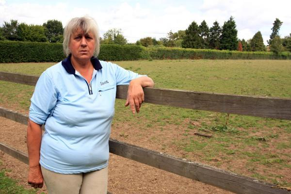 Owner of Cecil the stolen pony 'just wants him home'