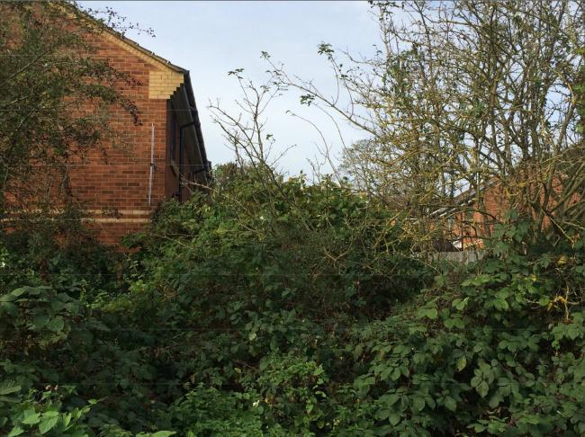 Knotweed has been found on land adjacent to Stripling Way, Watford