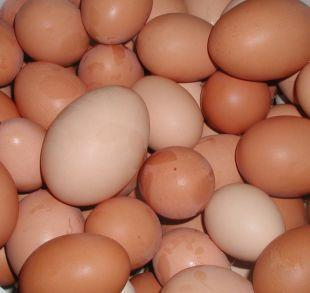 Watford Observer: Shopkeepers ban youngsters from buying eggs