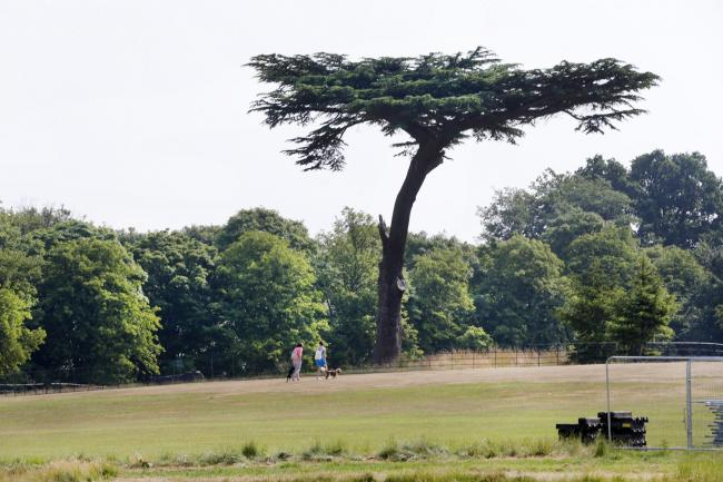 Events this weekend include a heritage walk through Cassiobury Park