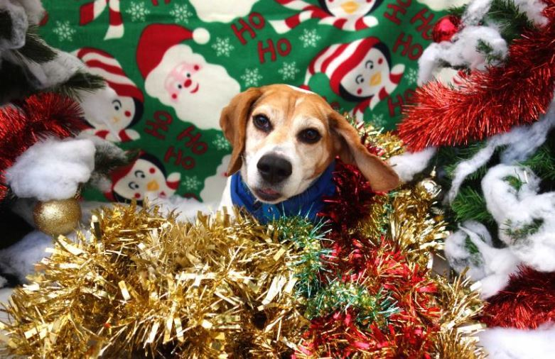 MP urges support for animal charity this Christmas