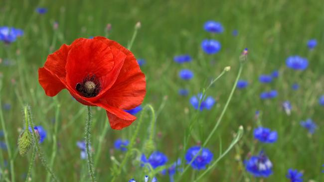 There are several Remembrance events taking place this weekend