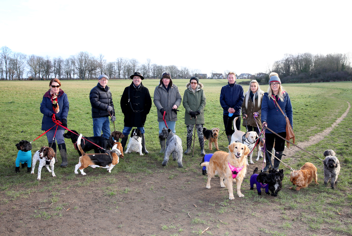 Bushey Manor Field is popular with professional dog walkers