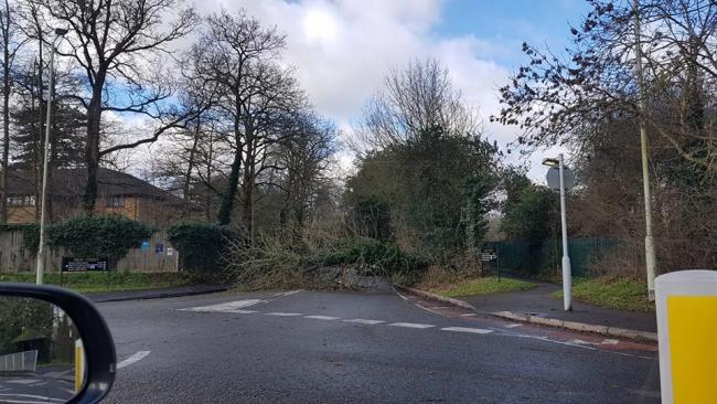 A tree down in Abbots Langley. It has since been cleared. Photo: Sasha Gomez