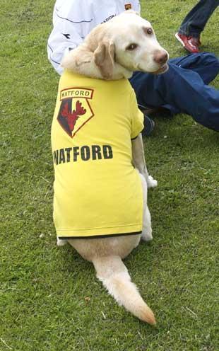¿alguien tiene algun logo del Watford con un animal MAZADO? 995797